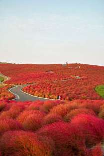 autumn-shrubs