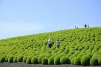 hitachi-seaside-park-7-790[2]
