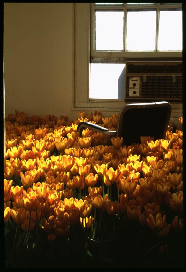 BLOOM-by-Anna-Schuleit-Tiny-Office-with-Tulips