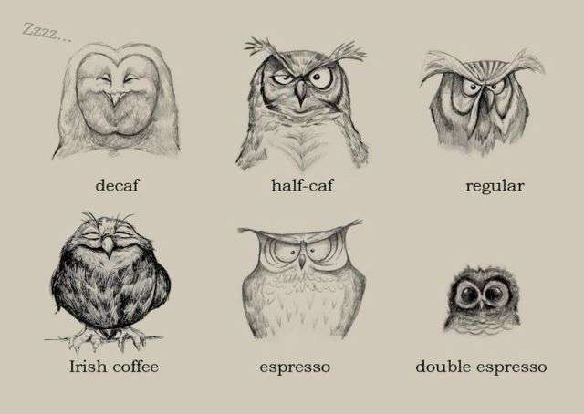 how to look after coffee tre